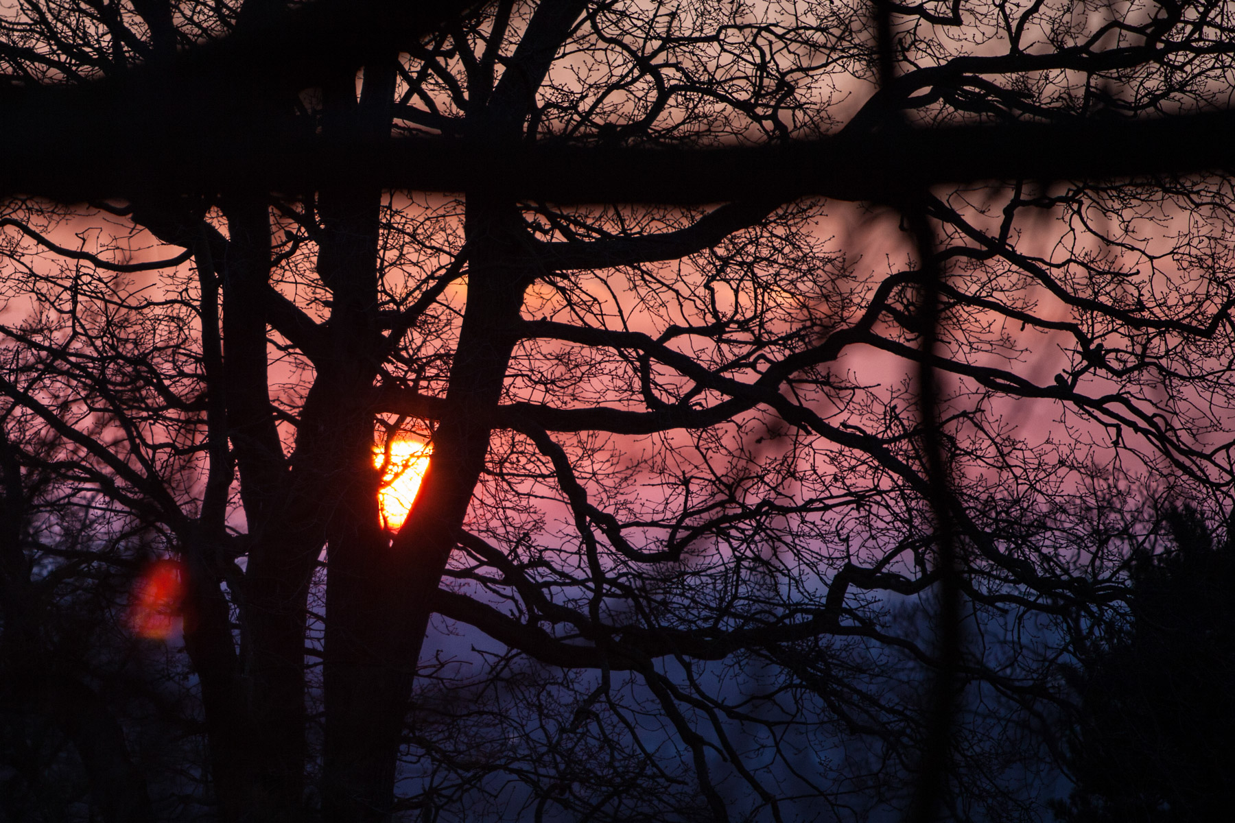 Sunset looking through silhouetted trees in Richmond Park, England.